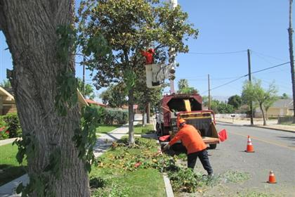 Parks Employee Working on Tree Removal